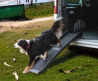 Dog Vehicle Ramp ZORA Black Foldable