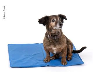 Cooling mat for dogs, 50 x 65 cm